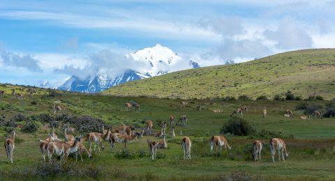 تشيلي وجهة سياحية متعددة النشاطات