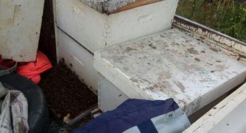 الطيبة: حاولا سرقة خلايا النحل، فأصيبا بلسعاتها
