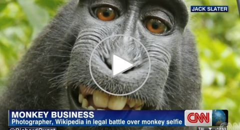 """صورة """"السائح والقرد"""" تشعل المواقع وتصل للمحاكم الأمريكية"""