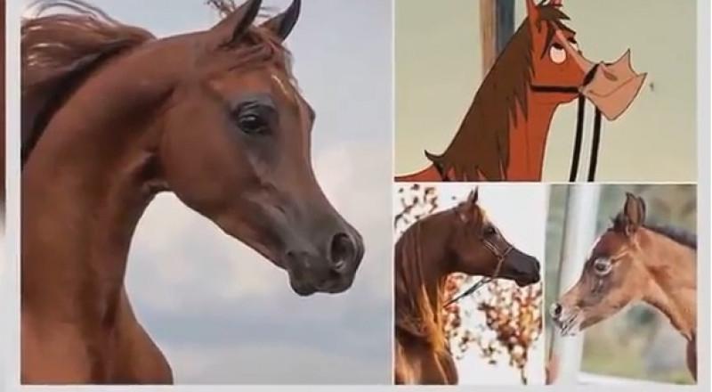 تهجين سلالة خيول عربية شبيهة بالرسوم المتحركة