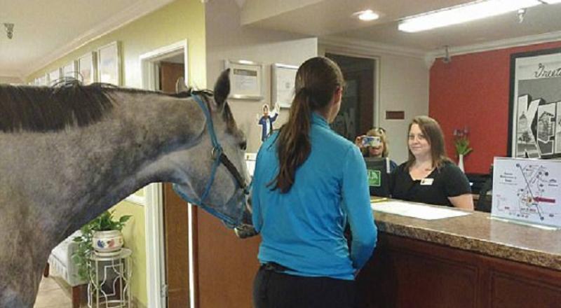 سيدة تحجز غرفة فندقية برفقة حصانها!