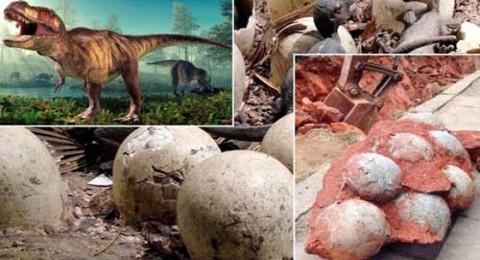 شاهد: اكتشاف 5 بيضات لـ ديناصور عاش قبل 70 مليون سنة