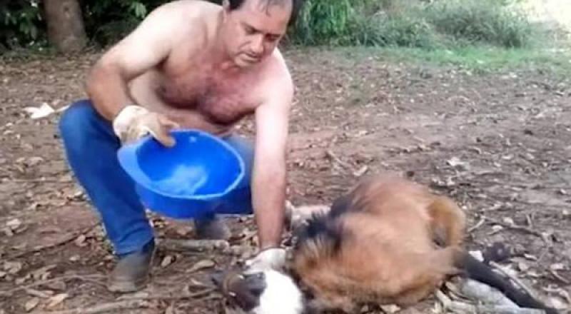 رجل يسقي ذئباً متوحشاً سقط من شدة العطش