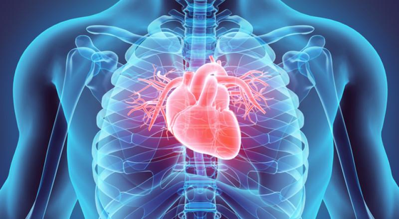 تجارب على أول قلب نابض من السيليكون