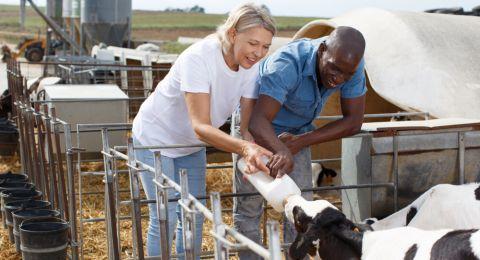 أهم البدائل للاستغناء عن حليب البقر