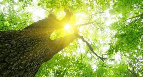 اليوم بداية فصل الصيف... أطول نهار وأقصر ليل