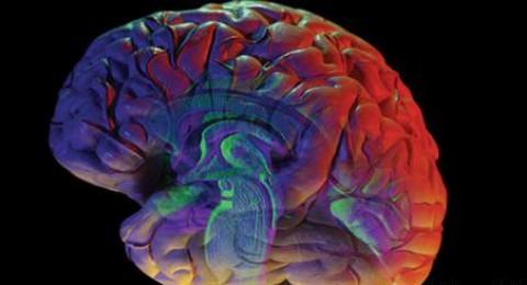 علماء يرسمون خريطة شاملة لقشرة المخ