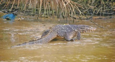 تمساح ينقض على صحافي بريطاني في سريلانكا ويلتهمه