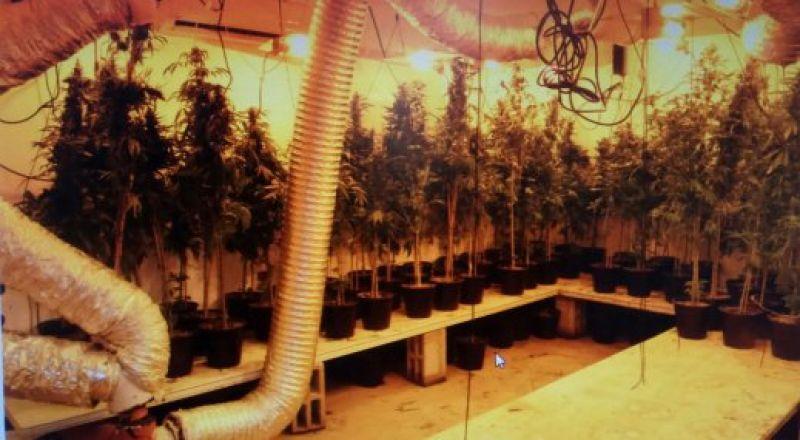 رهط: ضبط 215 شتلة مخدرات من نوع الكنابيس في مختبر داخل منزل