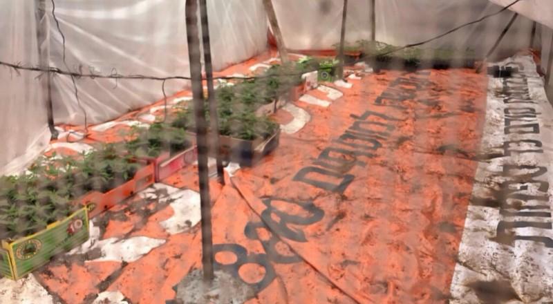 بالفيديو: دفيئة مخدرات في دبورية واعتقال 3 مشتبهين