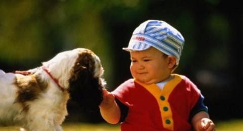 كيف أمنع ابني من الخروج من البيت ومن اللعب مع الكلاب؟