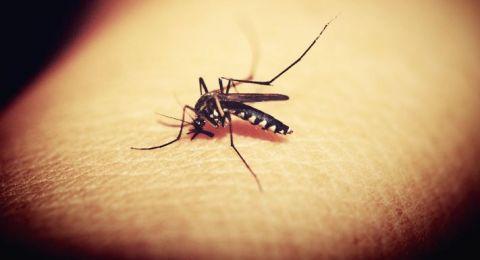 علماء: لدغة البعوض تدمر النظام المناعي البشري