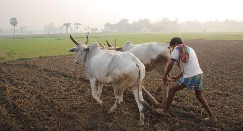 الهند: هندوس يضربون مسلما حتى الموت بسبب بقرة