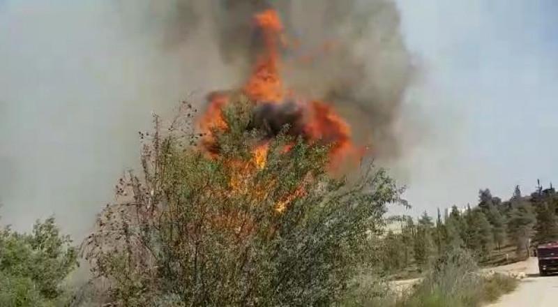 حريق هائل في أحراش مجاورة للقدس