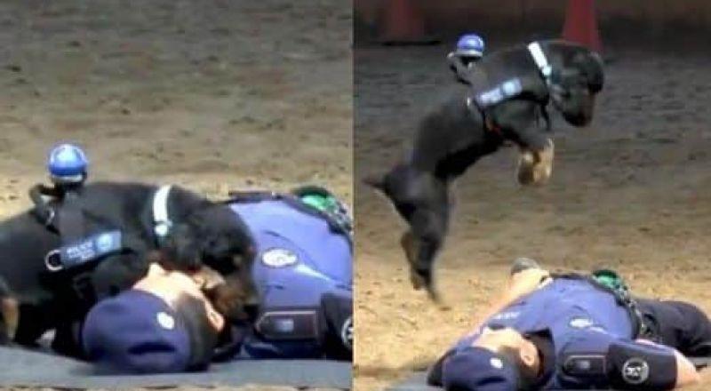 كلب يقوم بإنعاش قلب صاحبه الميت ويعيده للحياة