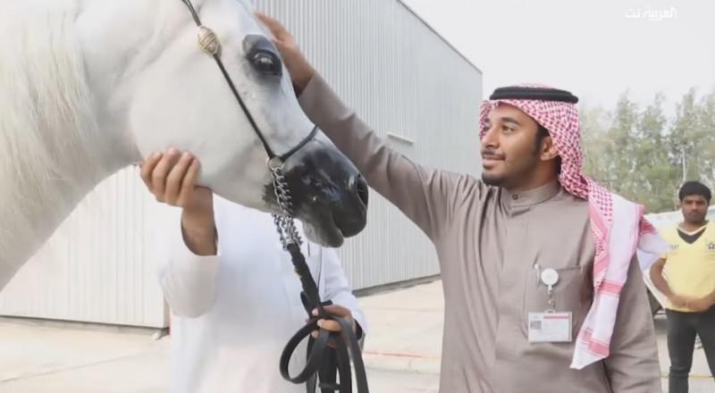حقيبة مكياج للخيل العربية الأصيلة