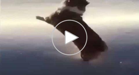 هل تم رمي هذا الكلب من الطائرة؟