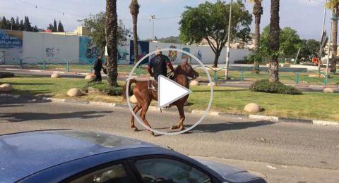 احياء ليوم الارض: انطلاق مسيرة خيول من عرعرة لاراضي الروحة
