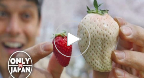 فراولة بيضاء في اليابان سعرها يضاهي الذهب