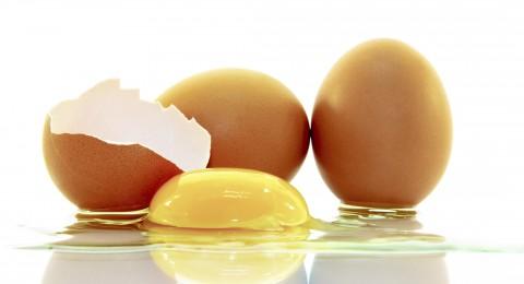 بهذه الطريقة تحافظ بيض طازج وصحي لمدة طويلة