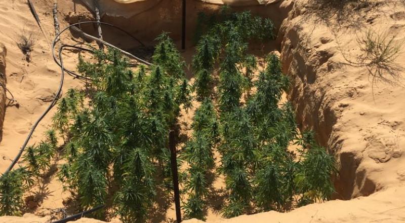 النقب: الشرطة تكشف عن 20 دفيئة مخدرات خلال اسبوع واحد