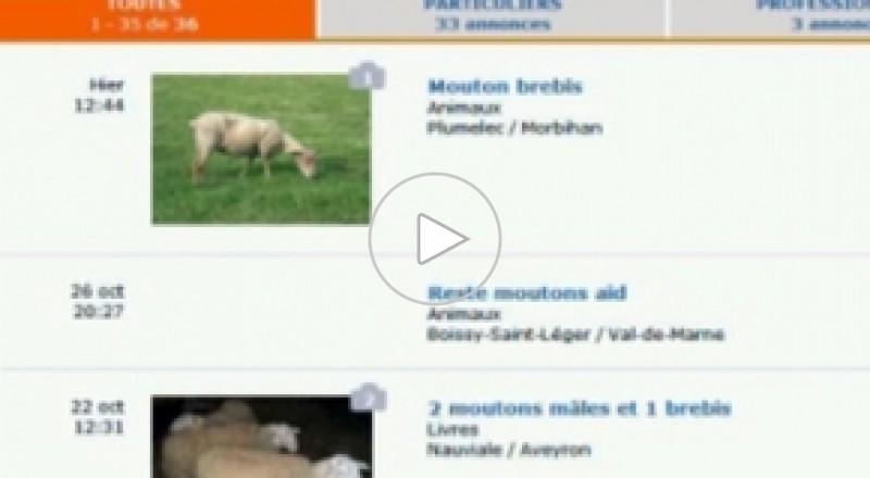 مسلمو فرنسا يختارون ويذبحون الأضحية عبر الإنترنت