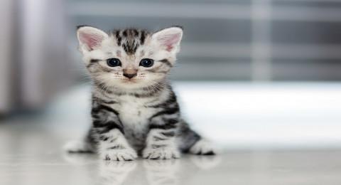 قطة تقتحم عرض أزياء وتسرق الأضواء من العارضات