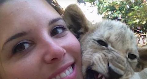 كيف تضر السياحة الحيوانات في إفريقيا؟