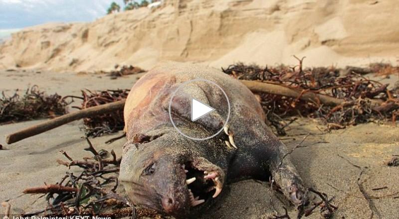 العثور على مخلوق غريب في كاليفورنيا