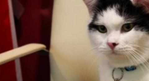 القط المحظوظ! من شوارع العاصمة عمّان إلى موظف في السفارة البريطانية بمنصب دبلوماسي