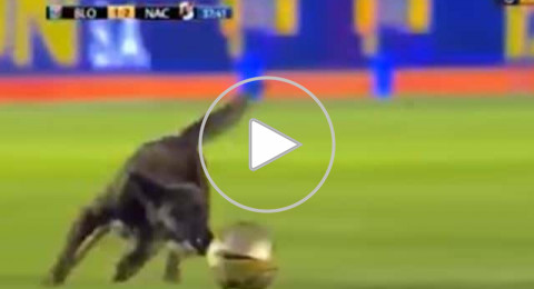 كلب يقتحم ملعباً خلال مباراة ويقتنص الكرة من اللاعبين