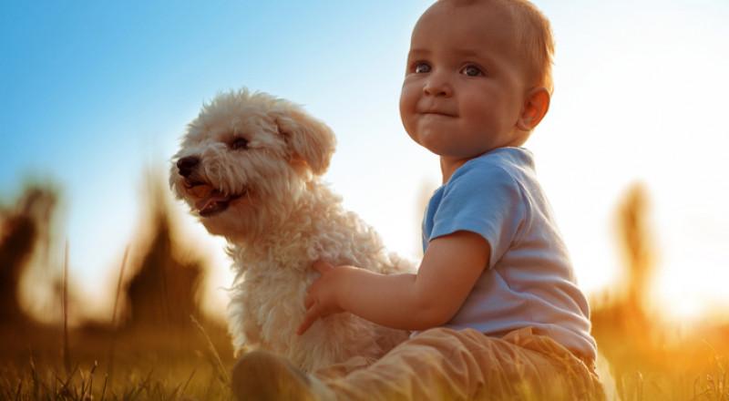 الكلاب تحمي الأطفال من أمراض الجلد والربو