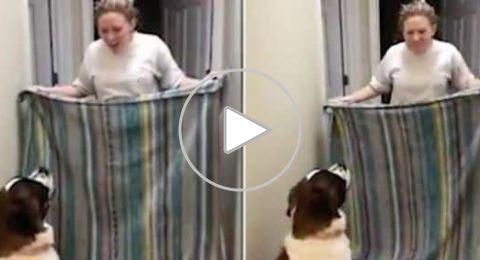 فيديو لردة فعل كلب بعد ارتطام صاحبته بالجدار يحقق 16 مليون مشاهدة