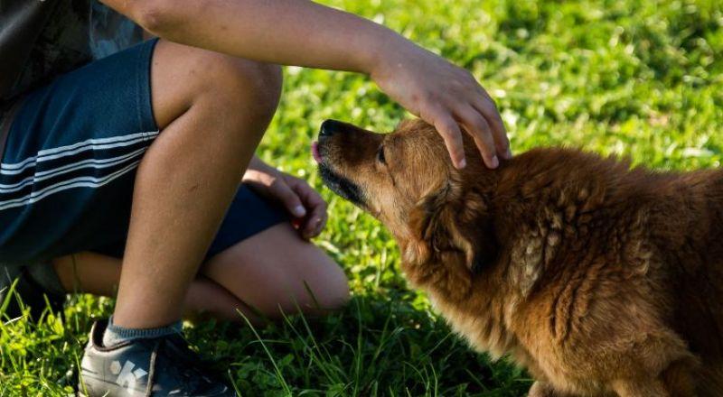 10 حالات تحولت فيها الحيوانات إلى منقذة للبشر