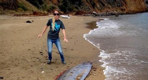 العثور على أغرب سمكة ثعبان البحر بكاليفورنيا