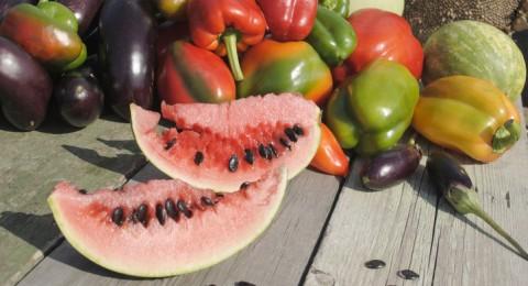 3 أطعمة مذهلة تحمي من أضرار أشعة الشمس