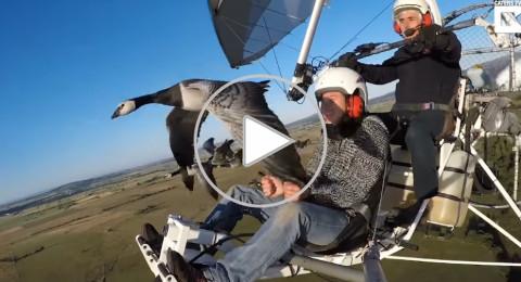 لقطات مذهلة لطيارين يلامسان أسراب الطيور
