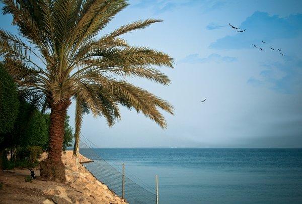 الجزر السعودية.. طبيعة خلابة وأجواء رائعة