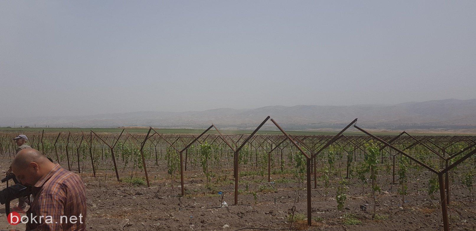 مصطفى: صندوق الاستثمار على وشك الإعلان عن شركة انتاج زراعي ب 80 مليون دولار