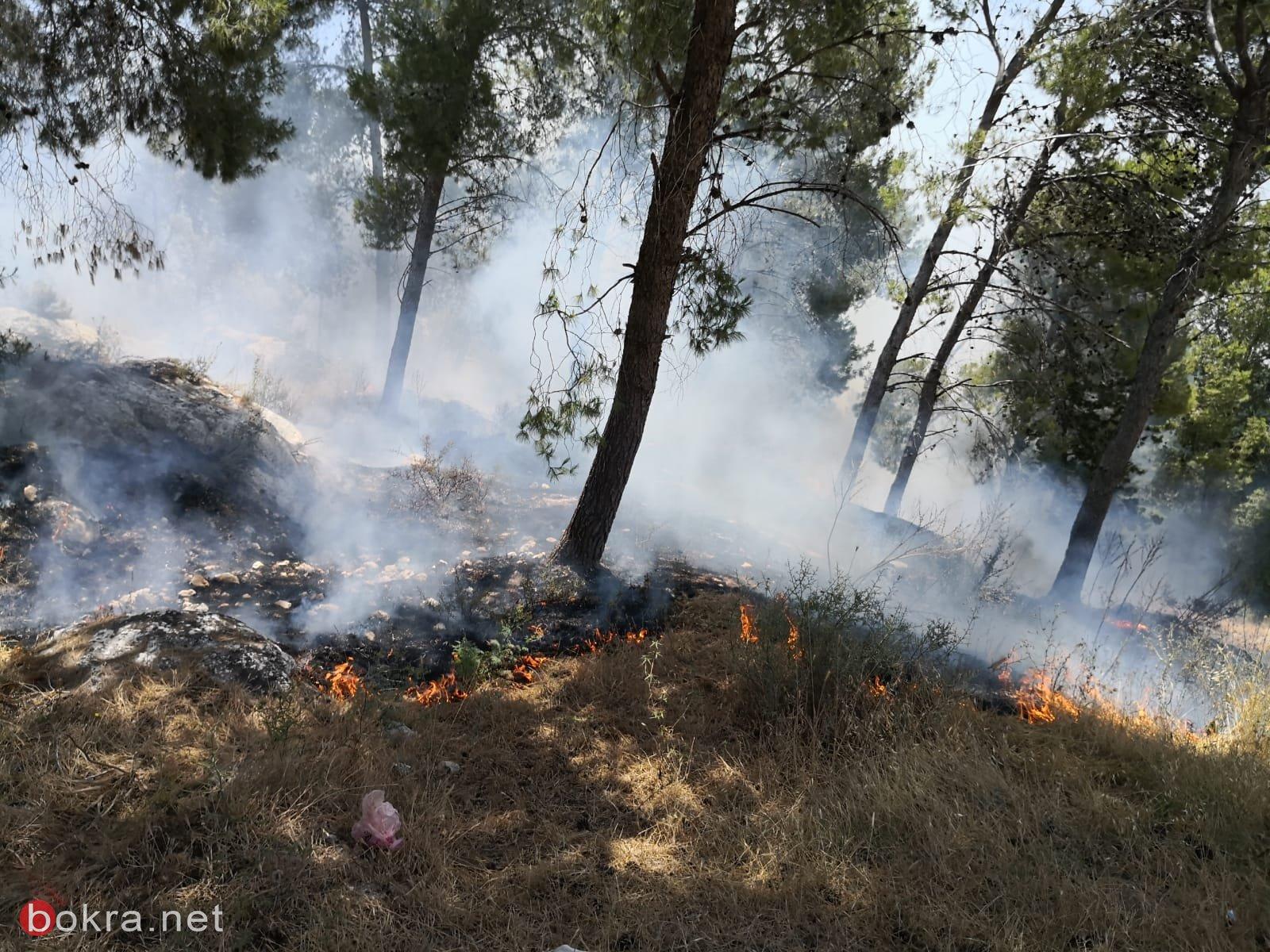 اندلاع حريق في أحراش طنطور قرب كفرياسيف