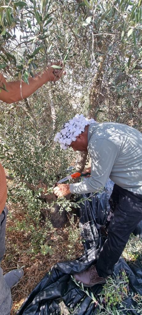 القوات الاسرائيلية تمارس التخويف لمنع المزارعين من الوصول إلى أراضيهم وقطف الزيتون في منطقة رابود المتاخمة لمستعمرة عتنئيل جنوب الخليل-0