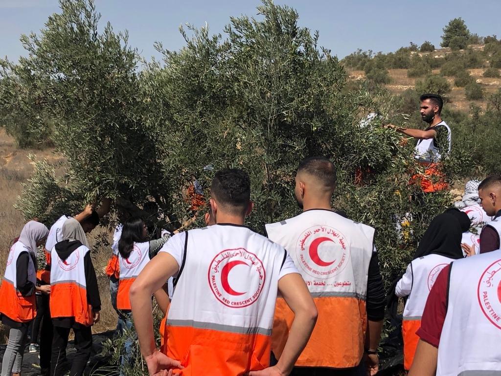 القوات الاسرائيلية تمارس التخويف لمنع المزارعين من الوصول إلى أراضيهم وقطف الزيتون في منطقة رابود المتاخمة لمستعمرة عتنئيل جنوب الخليل-3