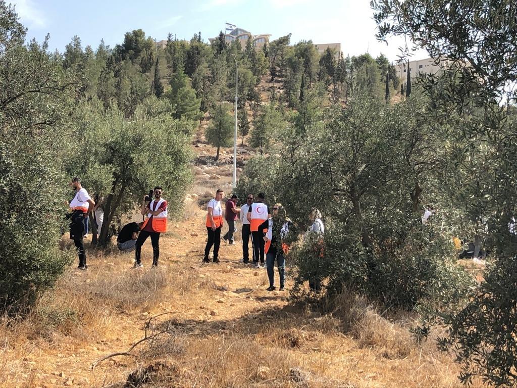 القوات الاسرائيلية تمارس التخويف لمنع المزارعين من الوصول إلى أراضيهم وقطف الزيتون في منطقة رابود المتاخمة لمستعمرة عتنئيل جنوب الخليل-6