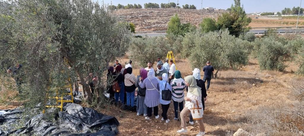 القوات الاسرائيلية تمارس التخويف لمنع المزارعين من الوصول إلى أراضيهم وقطف الزيتون في منطقة رابود المتاخمة لمستعمرة عتنئيل جنوب الخليل-8