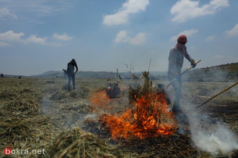 الفريكة الفلسطينية.. من الإنتاج المحلي إلى الأسواق العالمية