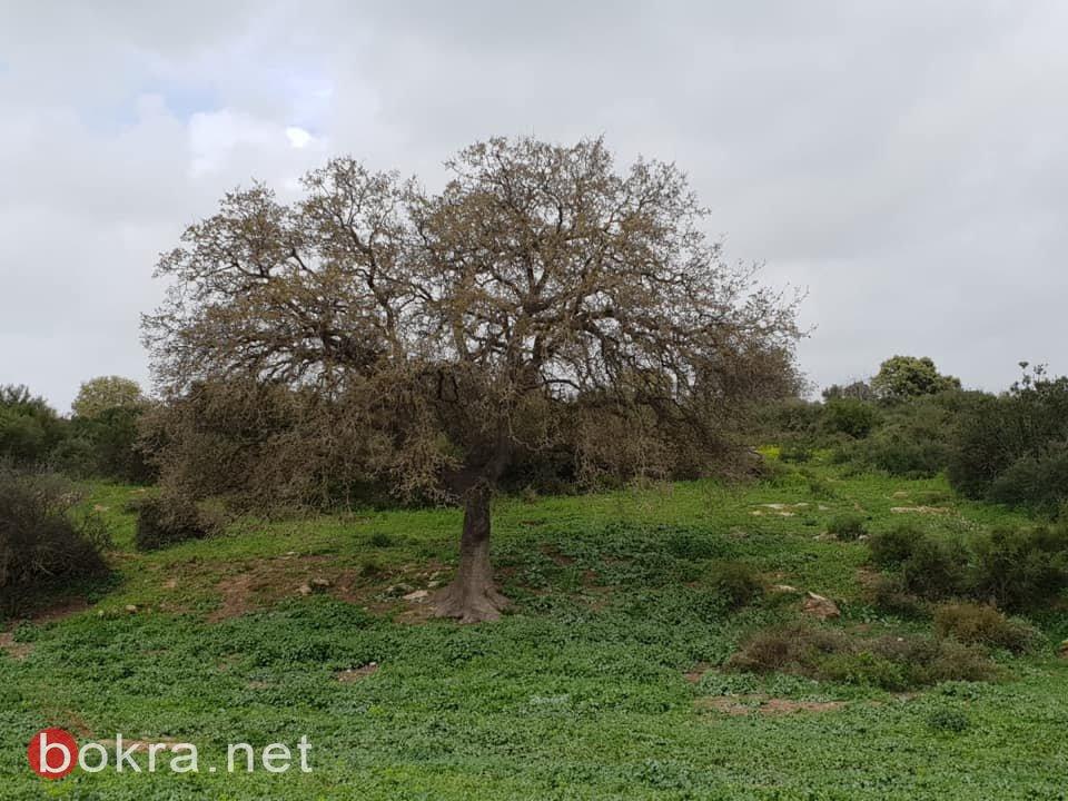 مسيرة العودة الثانية والعشرون على أراضي قرية السنديانة المهجرة