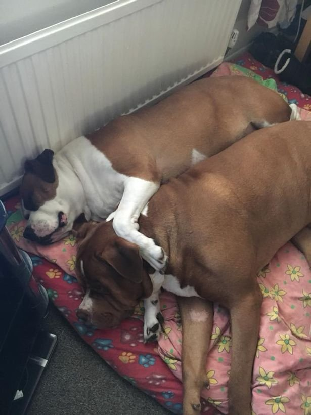 قصة مروعة: كلبان ينهشان صاحبتهما حتى الموت والسبب صادم!
