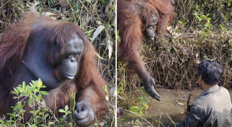 رد فعل غير متوقع لقردة شاهدت رجلا يغرق