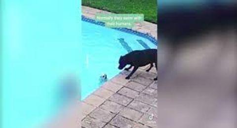 بالفيديو: كلب وفي في مهمة إنقاذ بطولية