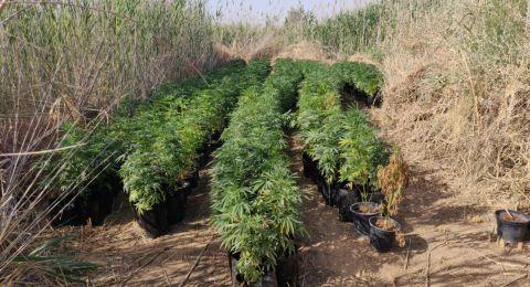 القبض على 3 مشتبهين من سكان التجمعات السكنية البدوية في النقب ورهط بتجارة المخدرات